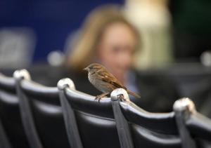 bird on chair